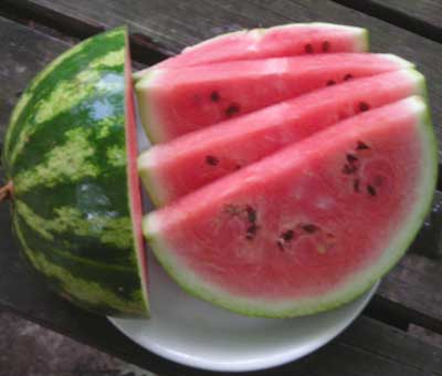 Crimson Sweet, Virginia Select WATERMELON 3 g