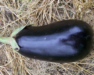 Early Black Egg EGGPLANT 0.25 g