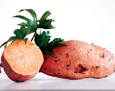 ginseng sweet potato (slips for spring planting)