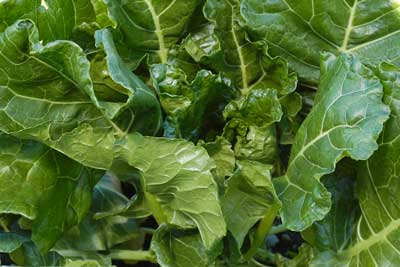 Green Glaze COLLARDS 2 g