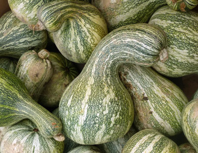 Green-Striped Cushaw (Striped Crookneck) Winter Squash 4 g