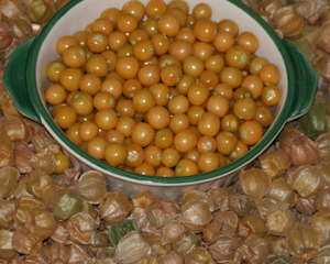 Cossack Pineapple Ground Cherry 1.5 g