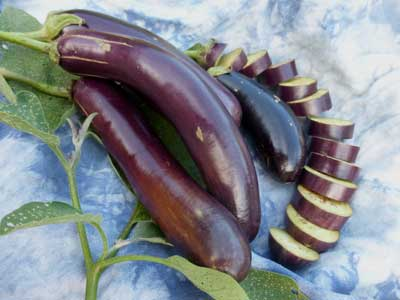 Long Purple Eggplant 0.25 g