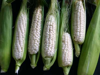 Luther Hill Sweet Corn, bulk size: 1/2 lb