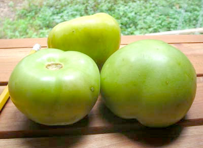 Plaza Latina Giant Tomatillo 1.5 g
