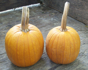 Small Sugar PUMPKIN 28 g