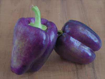 Purple Beauty Sweet Bell Pepper 3 g