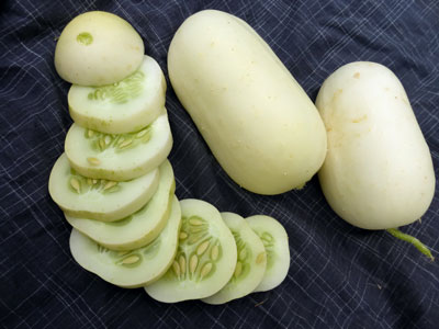 Roseland Small White Pickling Cucumber 2 g