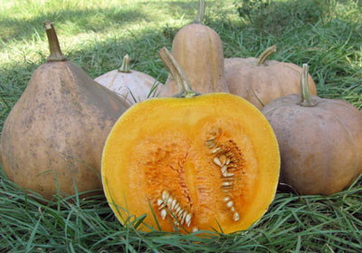 Seminole, Larger Fruited Pumpkin 3 g