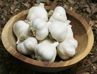 S&H Silverskin Softneck Garlic 8 oz.
