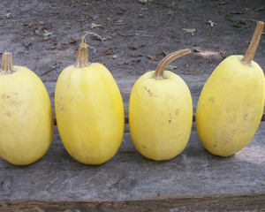 Spaghetti Squash (Vegetable Spaghetti) Winter Squash 4 g