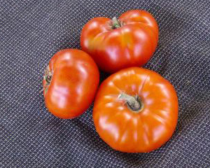 Hazelfield Farm Red Tomato 0.16 g