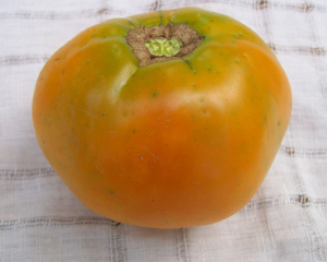 Earl of Edgecombe TOMATO 0.16 g
