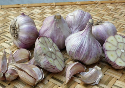 Turkish Red Hardneck Garlic 8 oz