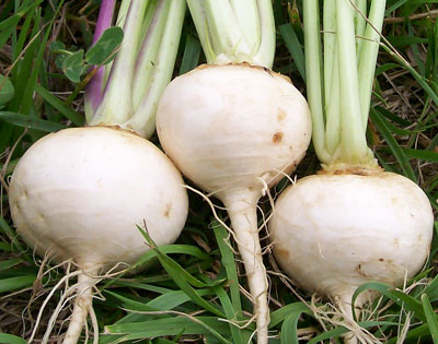 White Egg Turnip 28 g