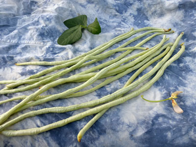 White Galaxy Asparagus Bean (Yardlong, Yard Long) 7 g