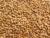 Wheat, Hard Winter, Nu East, bulk size: 4 lbs