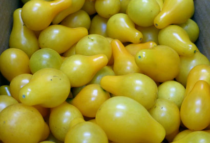Yellow Pear Cherry Tomato 0.08 g