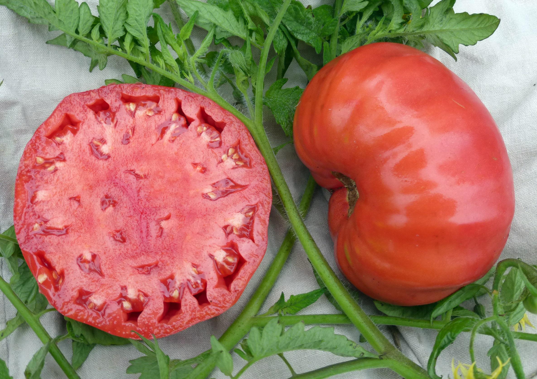 Mortgage Lifter Radiator Charlie S Tomato