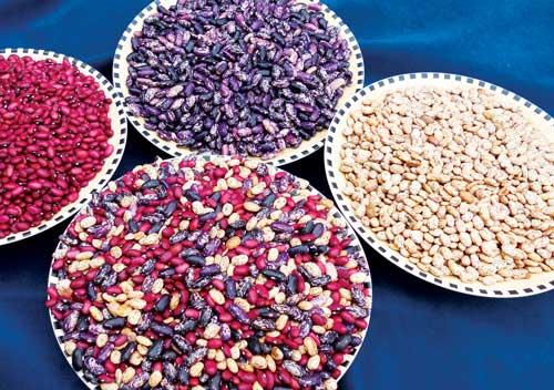 drying beans, heirloom