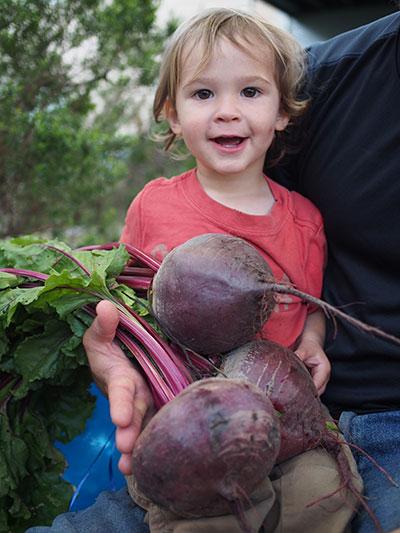 Concurso de fotografía de jardín tonto   Intercambio de semillas de exposición al sur